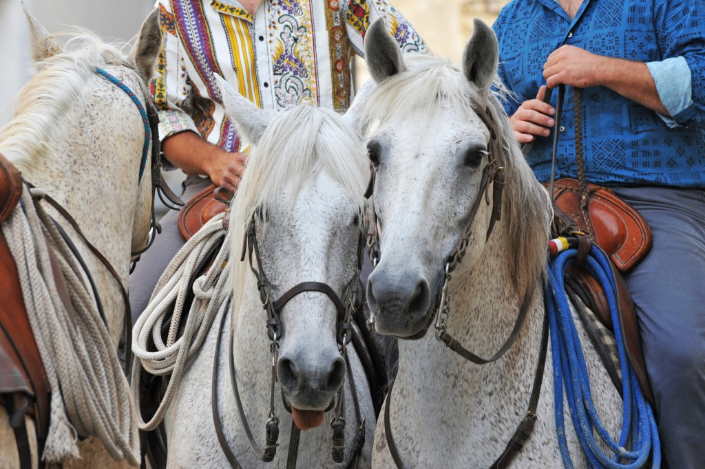 Traditional Camargue