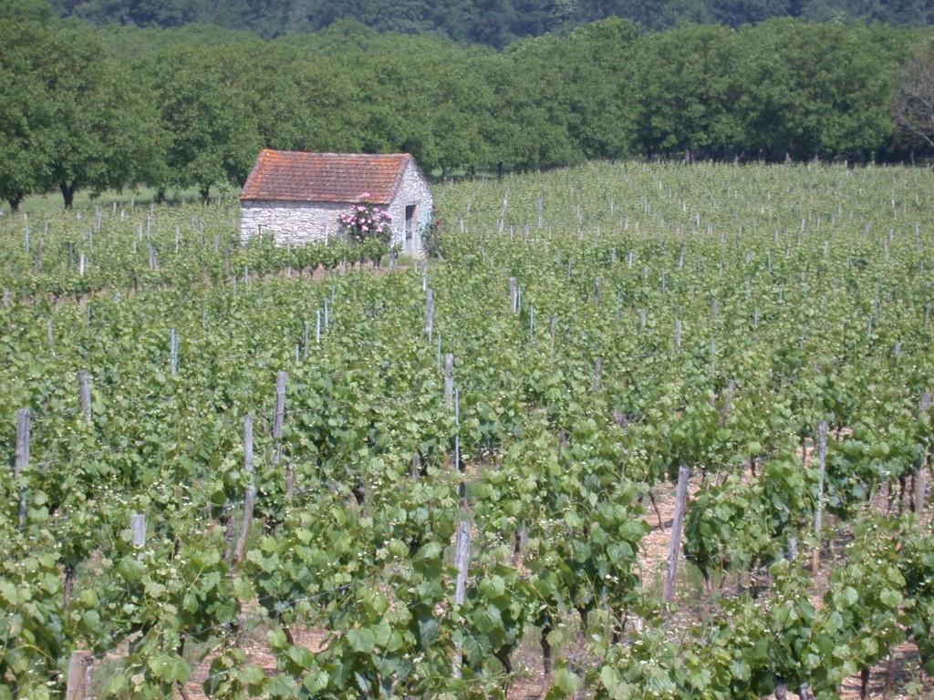 Feet in the vineyard