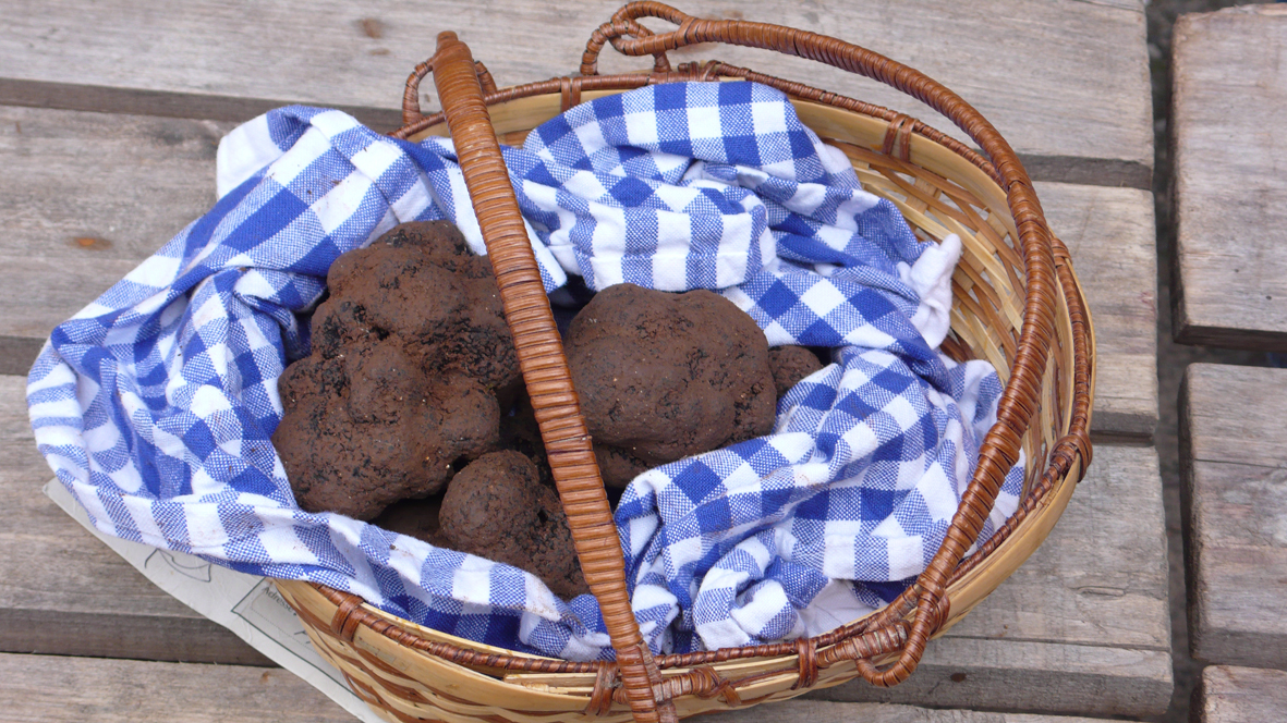 truffes2-©-Lot-Tourisme-Cathy-Seguy